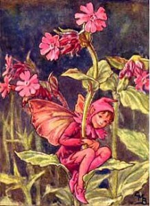 The-Red-Campion-Fairy
